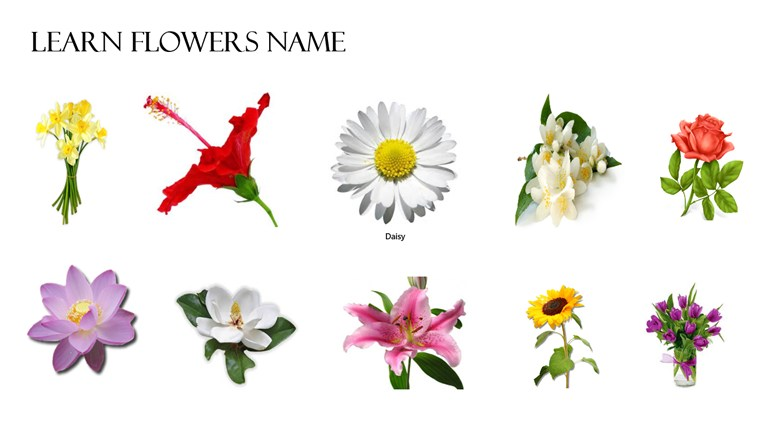 pictures and names of flowers  flower, Natural flower