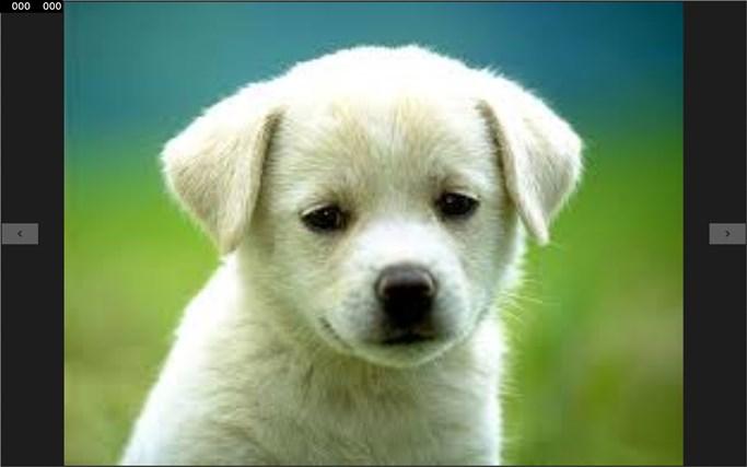 Cruel dogs