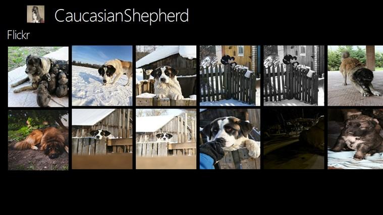 CaucasianShepherd